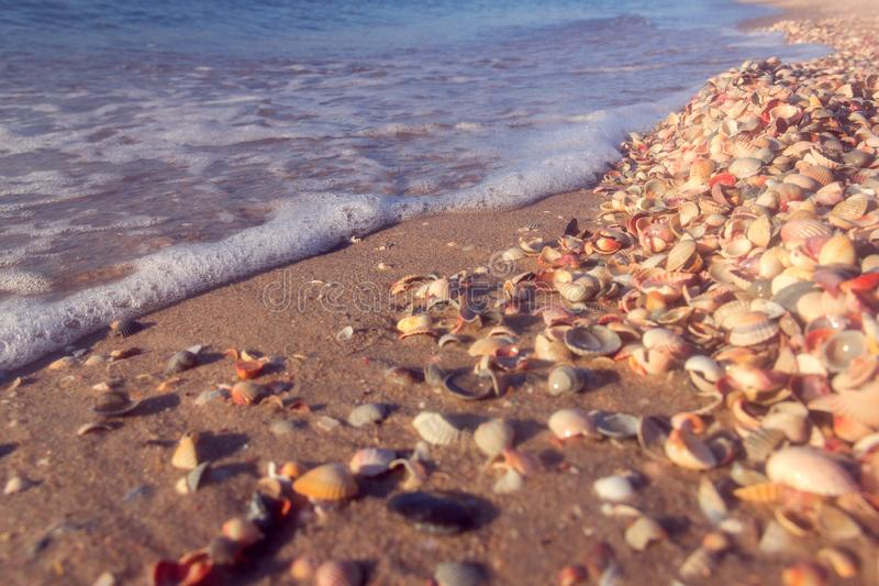 The sea coast from shells royalty free stock photo