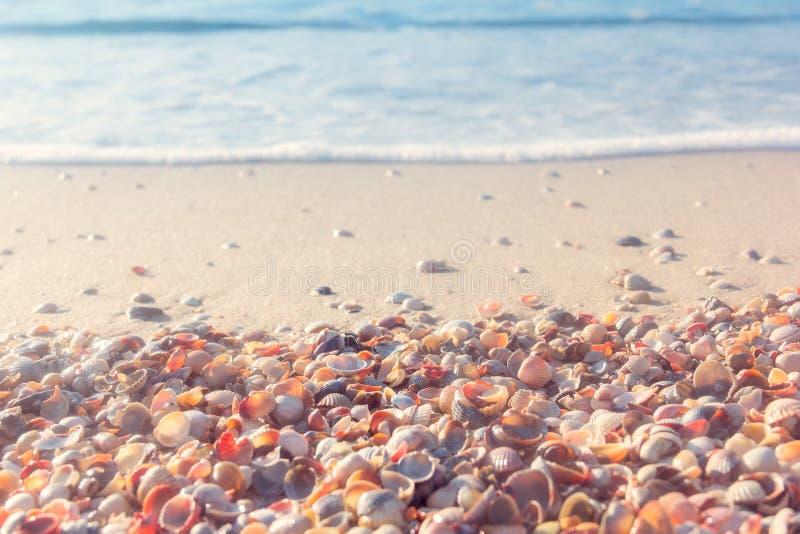The sea coast from shells stock photography