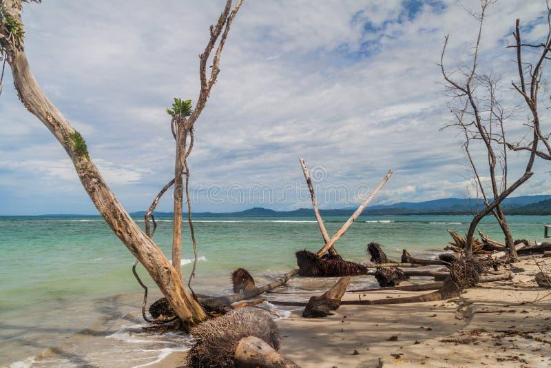 Sea coast in Cahuita National Park, Costa Ri royalty free stock photos