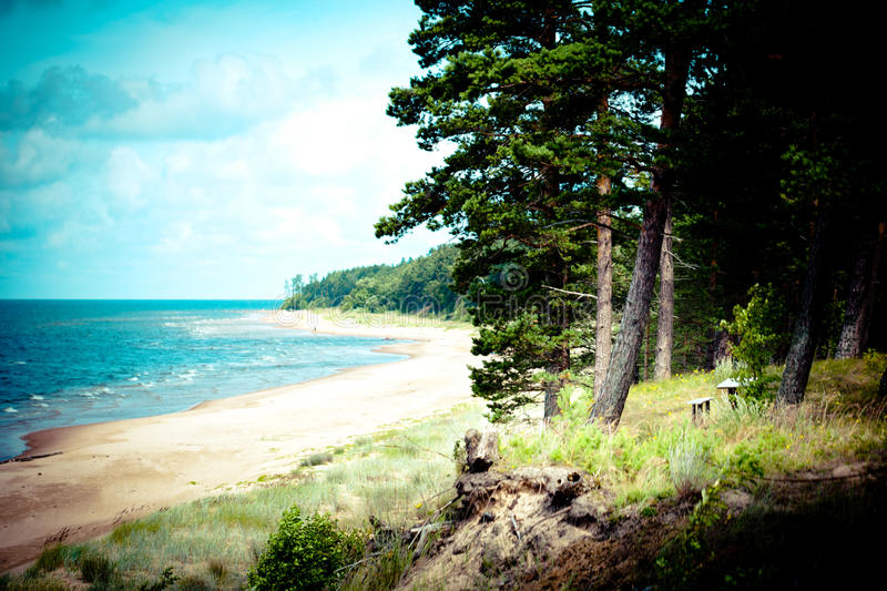 Sea coast with forest. Forest trees and sea coast summer time royalty free stock image