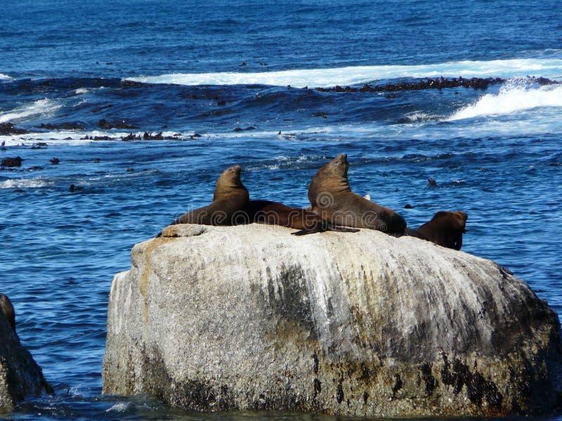 Sea, Coast, Rock, Coastal And Oceanic Landforms stock images