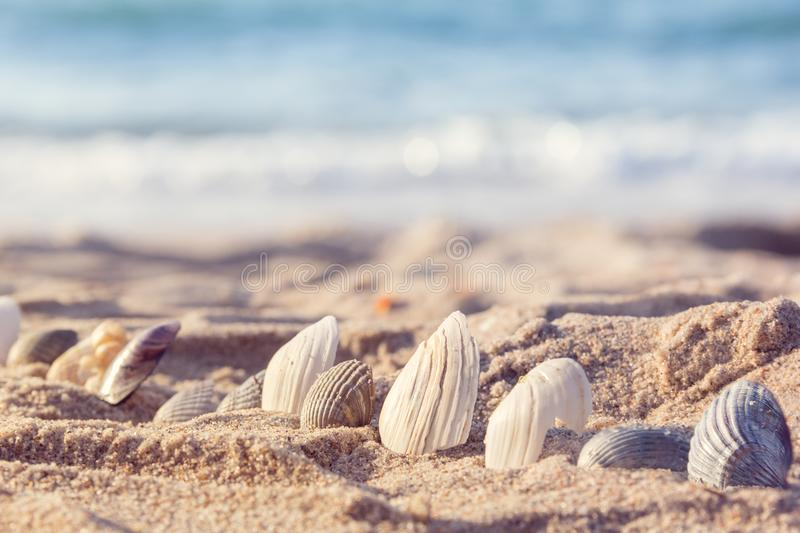 Seashells in the sand stock photography