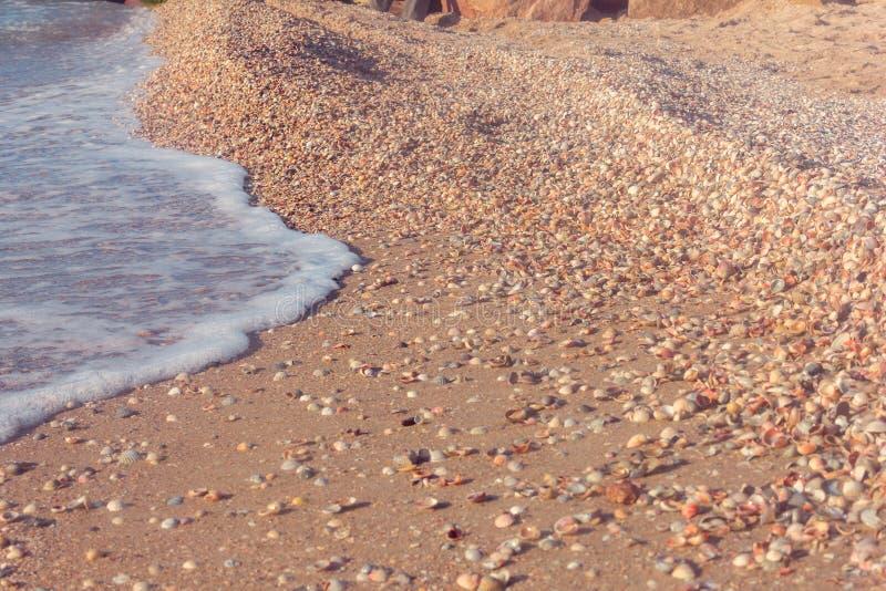 The sea coast from shells royalty free stock image