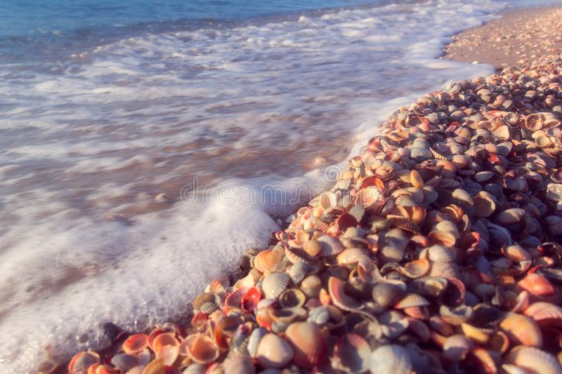 The sea coast from shells stock photos