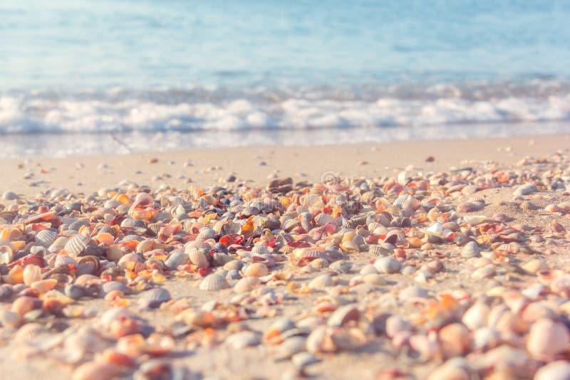The sea coast from shells stock photo