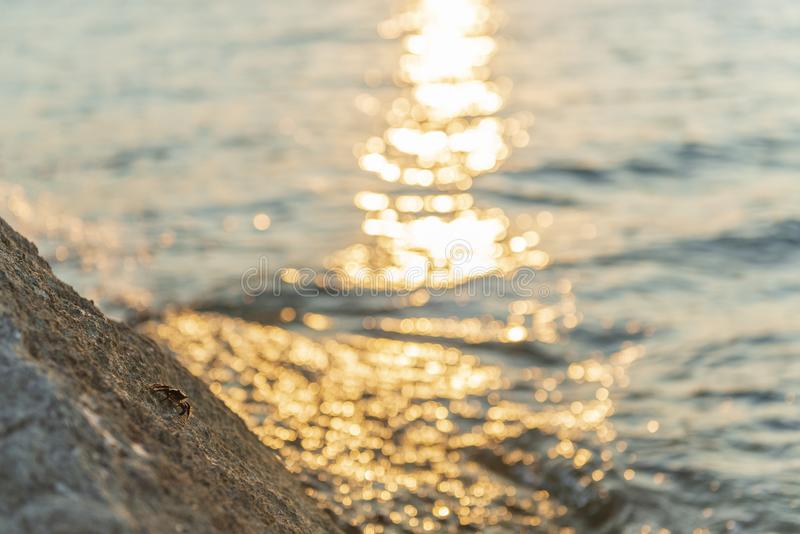Sea coast with sun flare and crab on a stone. Warm summer evening royalty free stock image