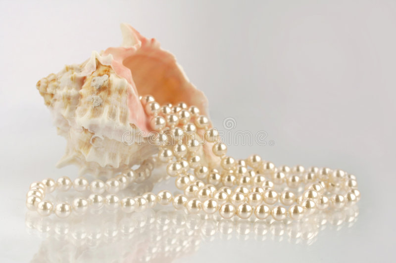 Sea cockleshell. With a beads from pearls stock image