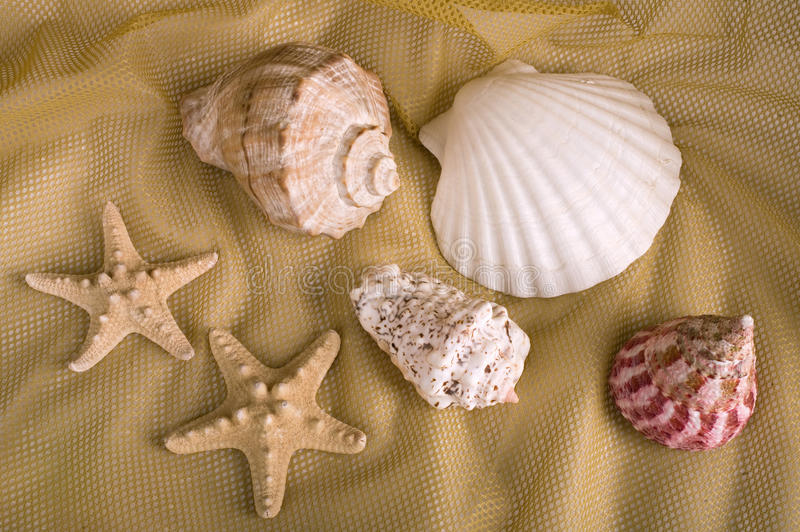 Sea cockleshells. On yellow background stock images
