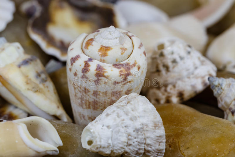 Sea cockleshells. Close up of small sea cockleshells stock photography