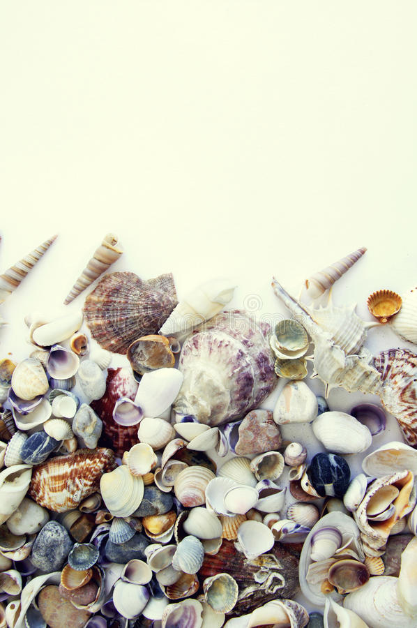 Sea cockleshells. On the light background stock photography