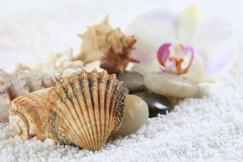 Sea cockleshells and orchid. On a towel royalty free stock image