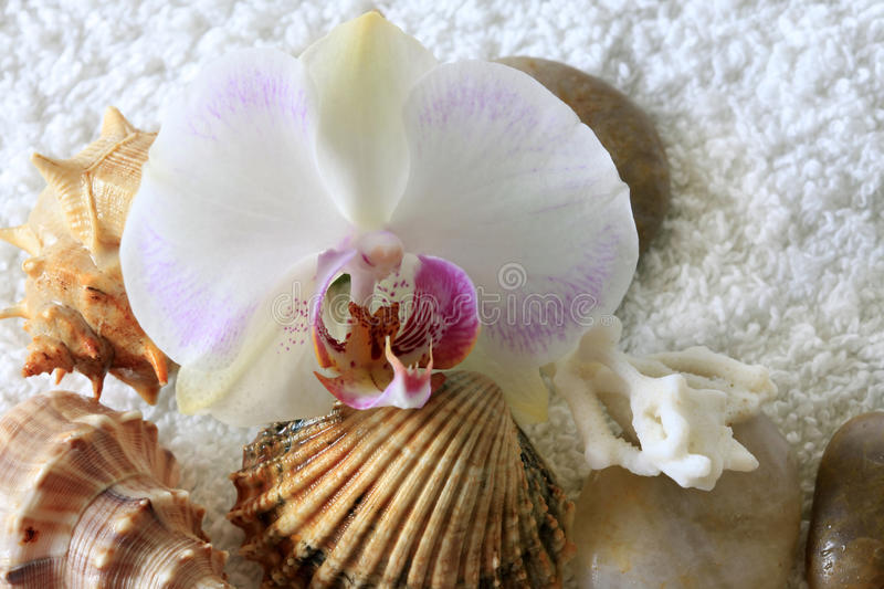 Sea cockleshells and orchid. On a towel stock photo