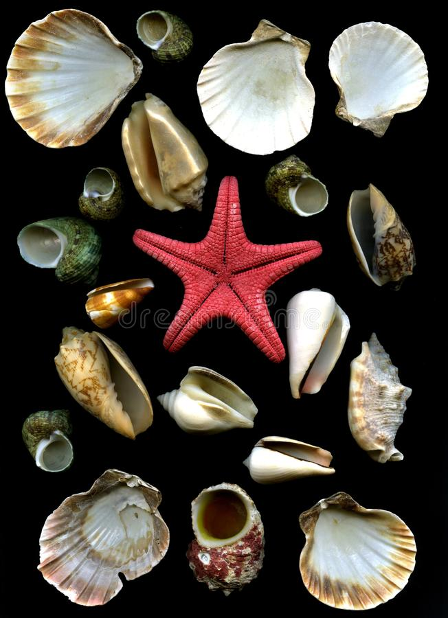 Sea cockleshells and starfish royalty free stock photos