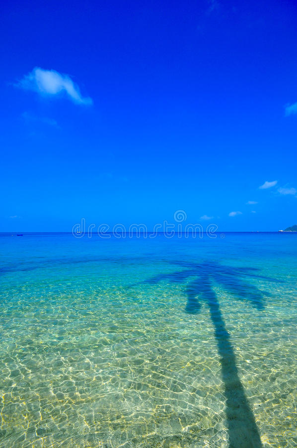 Download Sea and coconut palm stock image. Image of blue, sunlight - 20665505