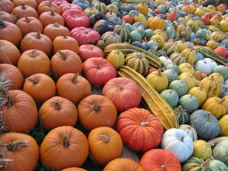 Sea of colorful diversified pumpkins royalty free stock photos