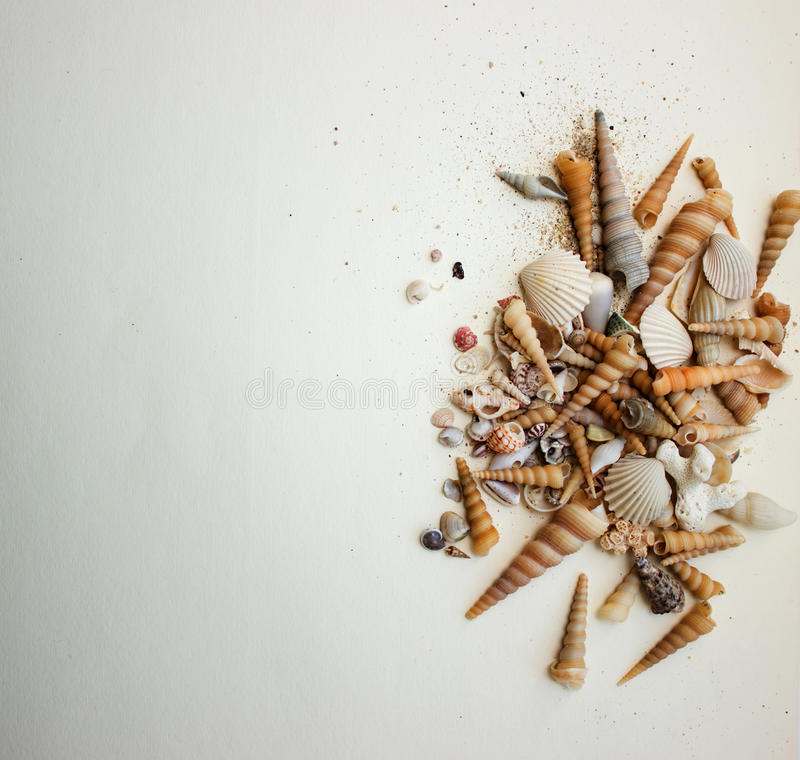 sea composition with shells royalty free stock image