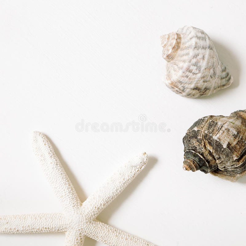Sea conch shells and starfish Isolated on white background. flat lay. Sea conch shells and starfish Isolated on white background royalty free stock images