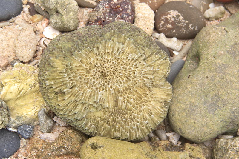 Sea coral-2. stock photography