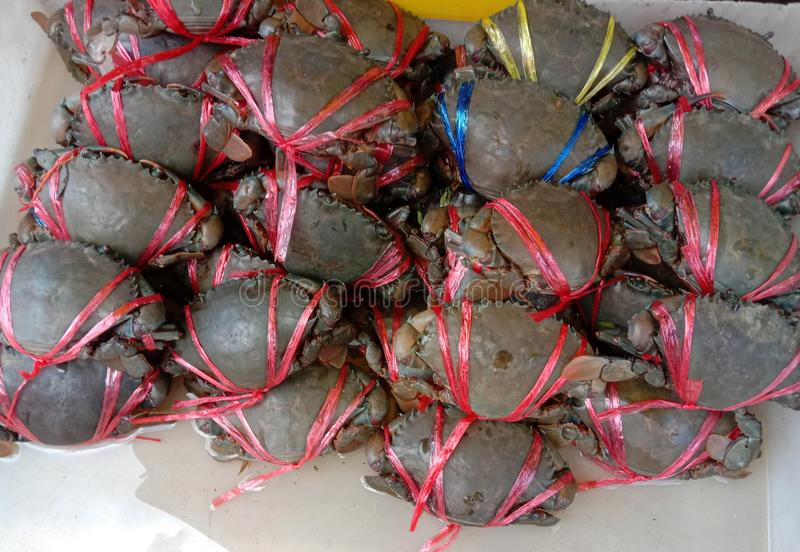 Sea crab is a type of crab that lives in the sea. Has a round, oval, oval Dark red or dark brown It is an economic. Sea crab is a type of crab that lives in the royalty free stock photo