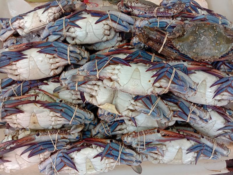Sea crab is a type of crab that lives in the sea. Has a round, oval, oval Dark red or dark brown It is an economic. Sea crab is a type of crab that lives in the stock photography