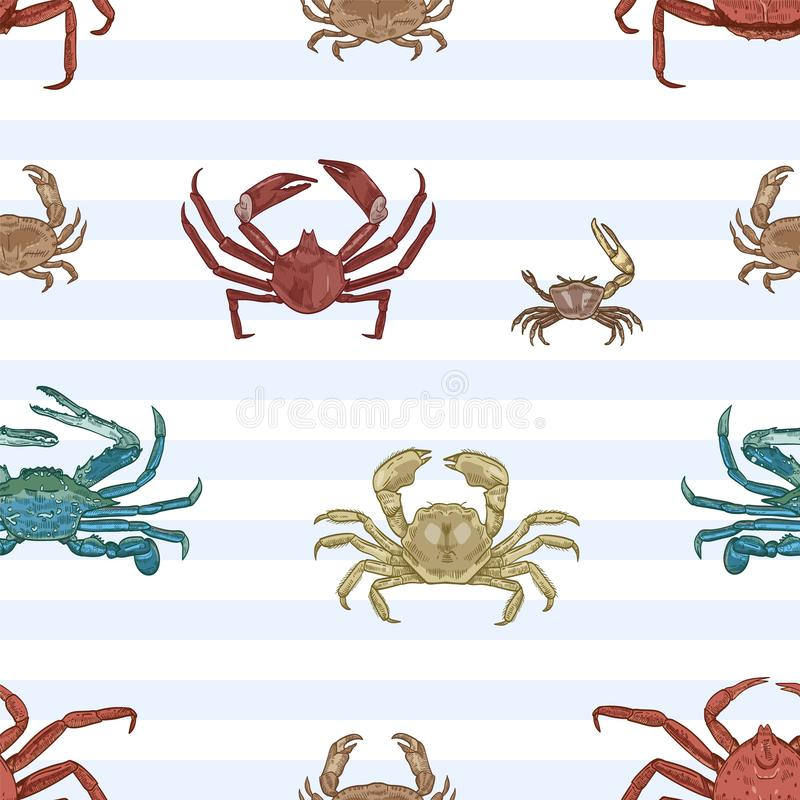 Sea crab vector seamless pattern. Aquatic animals, marine crayfish species on striped background. Restaurant seafood stock illustration