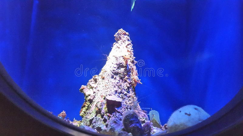 Sea creatures royalty free stock photo