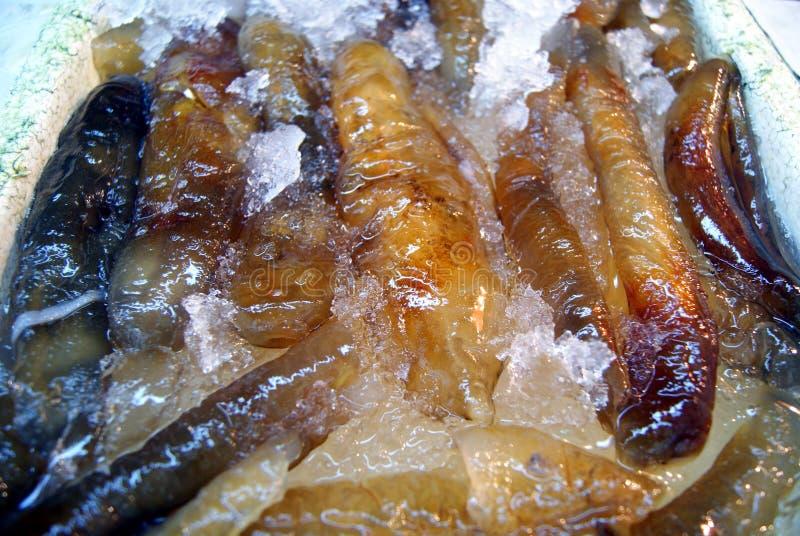 Sea Cucumber Royalty Free Stock Photos