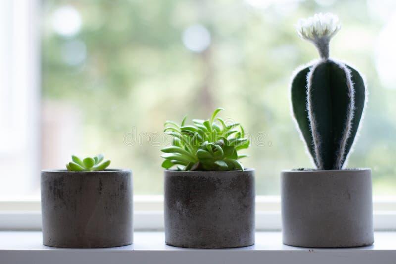 Sea diferente Plantas suculentas que crecen en los plantadores concretos que representan crecimiento imagenes de archivo