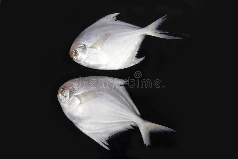 Download Sea fish stock image. Image of fish, fishery, healthy - 11946815