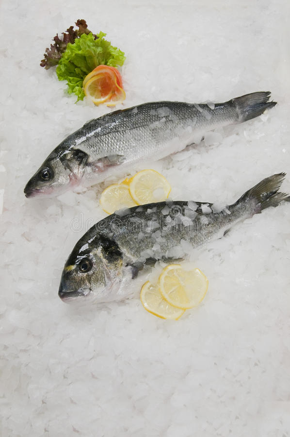 Sea fish stock images
