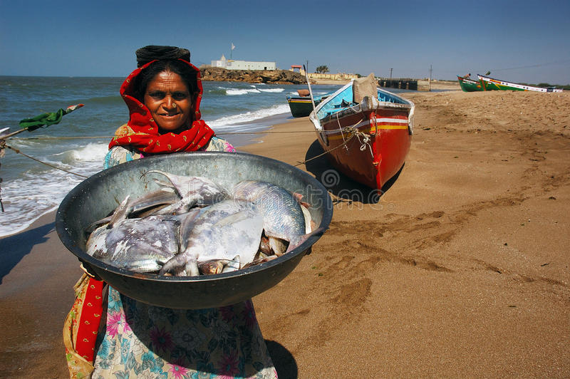 Download Sea Fish editorial stock image. Image of business, open - 24499334