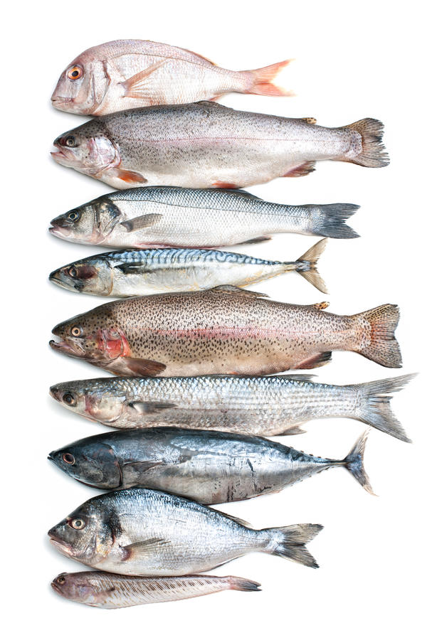 Sea fish collection royalty free stock images