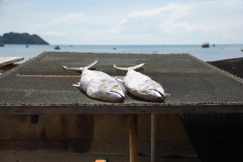 Sea fish of dried fishermen stock photos