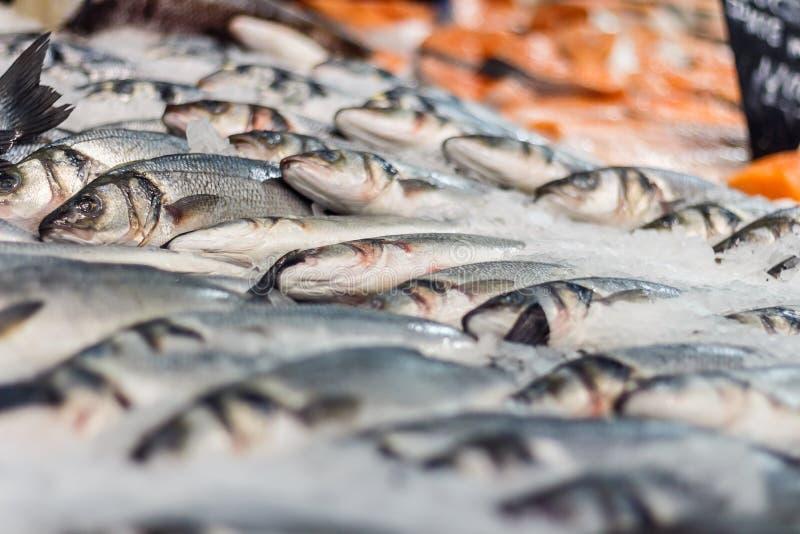 Sea fish in ice. Fresh sea fish in ice in supermarket stock image