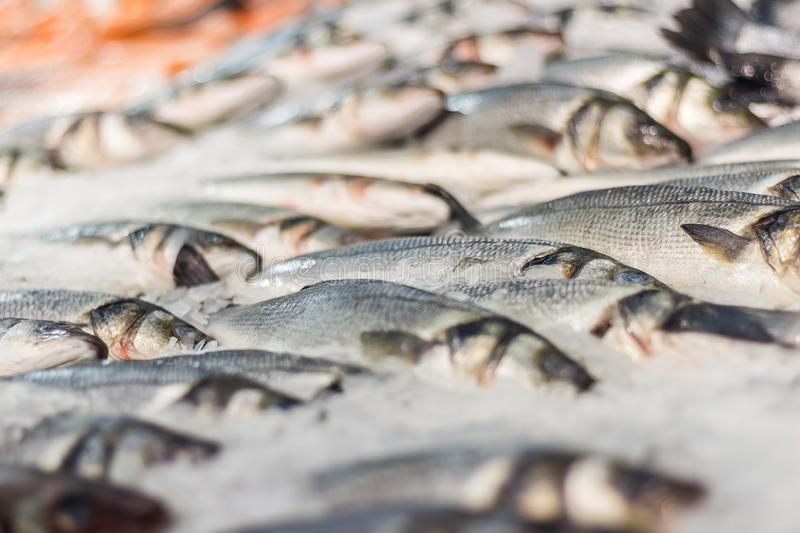 Sea fish in ice. Fresh sea fish in ice in supermarket stock photography