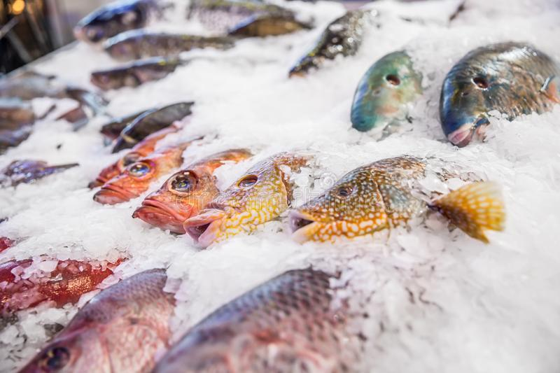 Sea fish on ice in seafood market. Fresh frozen raw healthy cold catch cooking fishing ocean selling eating background salmon aquaculture freshness gourmet royalty free stock photography