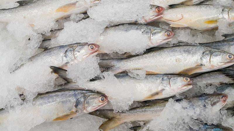 Sea fish on ice. Use for cooking have omega 3 royalty free stock image