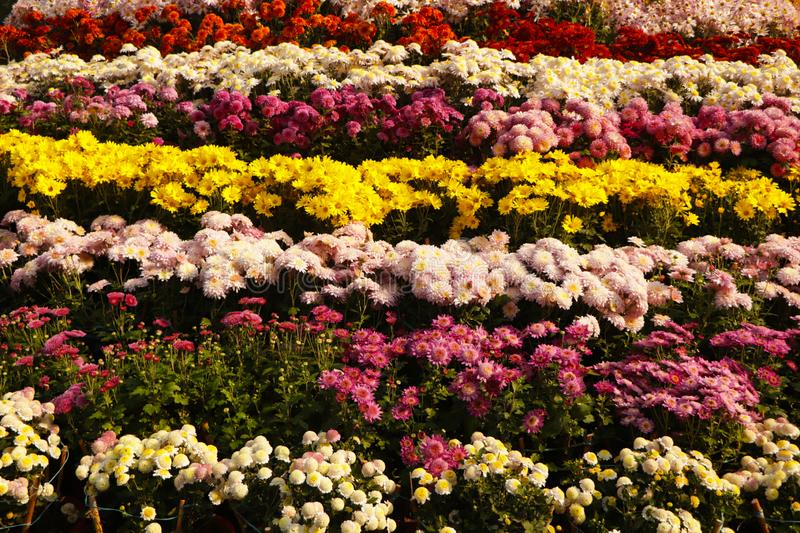 Sea of flowers. Frame filled with colorful flowers stock photos