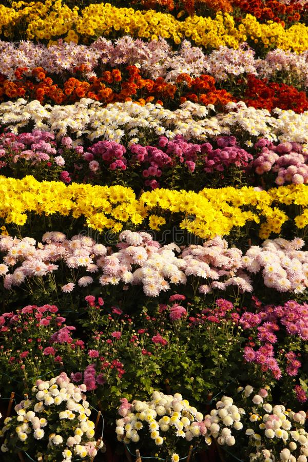 Sea of flowers. Frame filled with colorful flowers stock photo
