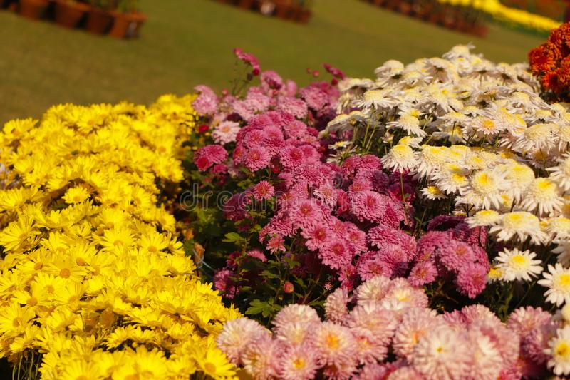 Sea of flowers. Frame filled with colorful flowers royalty free stock photo