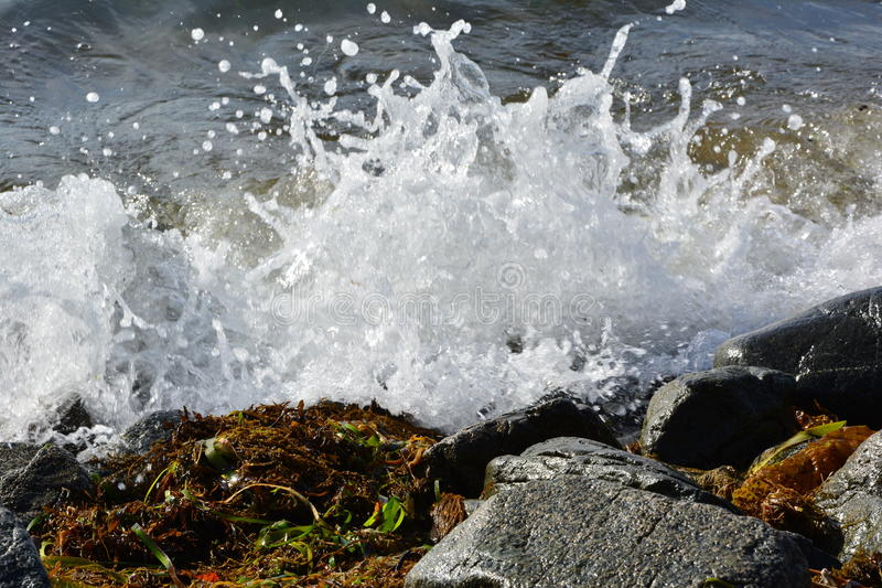 Sea foam royalty free stock image