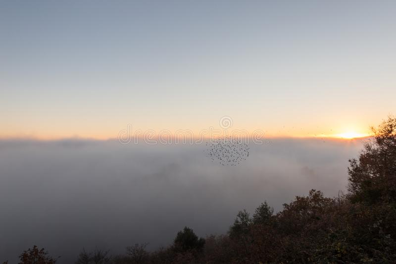 A sea of fog filling a valley at sunset, with a flock of birds f. Lying by royalty free stock photo