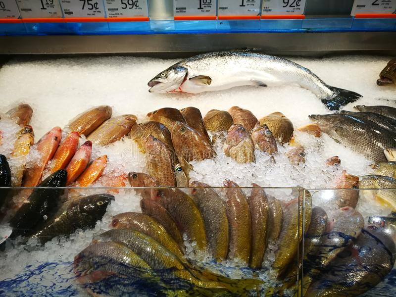 Sea food counter at gourmet supermarket. A photo showing some variety of fresh seafood displayed at the iced chilled section of a modern gourmet supermart, taken royalty free stock photo