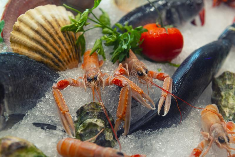 Sea food on ice. Shrimp, fish, mussels, oysters. Focus on shrimps royalty free stock image