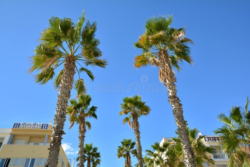 Sea front promenade with hotels and restaurants at Malvarrosa beach. VALENCIA, SPAIN - NOVEMBER 5, 2016. Sea front promenade with hotels and restaurants at stock photo