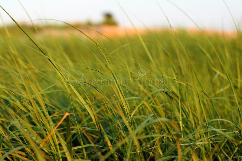 Sea Grass stock image