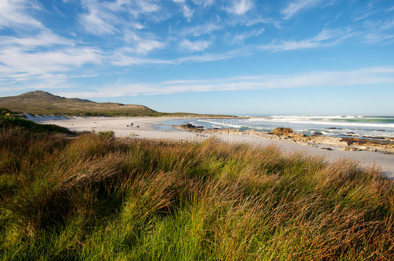 Sea Grass Coastline South Africa. Sea Grass along pristine beach at Cape Town coastline near Scarborough royalty free stock image