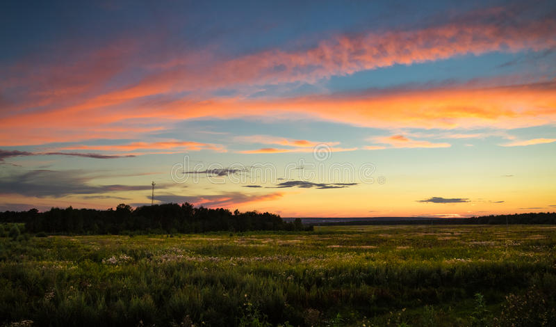 Sea of grass and coral clouds at sunset. Vanilla sunset in a field at summer. Blue sky with coral clouds. Behind the forest there is a tower of cellular stock image