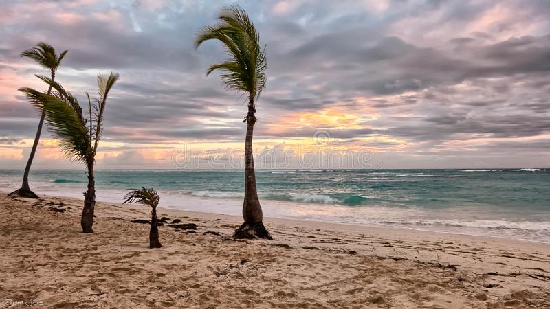 Sea Beside Green Palm Trees royalty free stock images