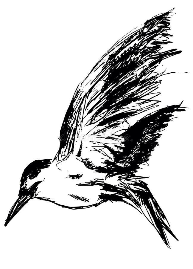 Download Sea gull stock illustration. Illustration of graphic - 12070041